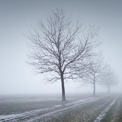 tempelhofer field | berlin, germany 2017 (philippdase) Tags: berlin tempelhoferfeld longexposure germany philippdase pentaxk1 tree winter cold formatthitech foggy misty