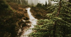 Photo (beautifulmysteriousforests) Tags: pinterest beautiful forests beautifulforests mysteryforests mystery forest green beautifulmysteriousforests mysterious