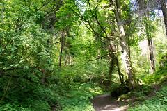 DSC_2622 (oria77) Tags: dolina bolechowicka krakow valley woodland poland