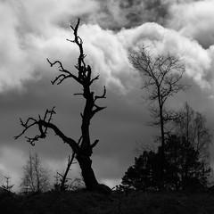 Trees in cleared woodland near Inshriak House, Dalnavert, Scotland (golferdave2010) Tags: near inshriak house 2016 7d april cairngorms canon dalnavert flowersplants landscape scotland trees nearinshriakhouse