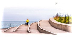 Many Paths (Wes Iversen) Tags: chicago fencefriday hff illinois lakemichigan montrosepointbirdsanctuary tamron150600mm birds digitalart fences lakes people seagulls walls water women yellow montrosepoint