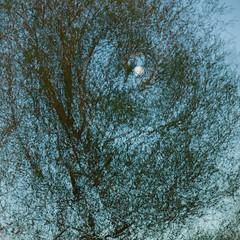The moon through a tree (Chris Hammerton) Tags: chrishammerton multipleexposure magormarsh landscape moonrise