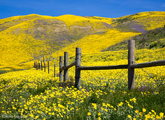 Wooden Fence Along Highway 58 (Mimi Ditchie) Tags: carrizo carrizoplains spring flowers wildflowers hff fence happyfencefriday woodenfence getty gettyimages mimiditchie mimiditchiephotography highway58 california