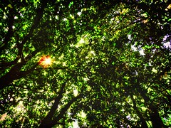 Nature's Ceiling (clarkcg photography) Tags: cover limitation notclear catch protect natural green leaves branch limbs flickrfriday ceiling