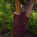 unusual+tree