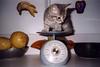 Tako on Scale (meg williams2009) Tags: cats pets animals cutecats funnycats beautifulcats feline kittens kitten filmpicture