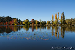 Canberra's parks (Anna Calvert Photography) Tags: australia canberra lakeburleygriffin travelphotography autumn autumncolours landscape landscapephotography nature trees water reflections parks