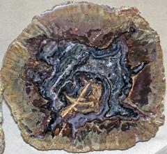 Agate-quartz nodule (Buchanan Ranch, Harney County, east of Burns, Oregon, USA) 2 (James St. John) Tags: agate quartz nodule buchanan ranch harney county burns oregon thunder egg eggs