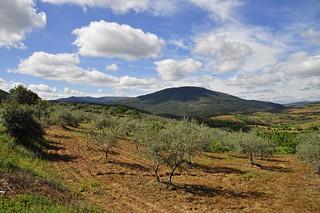 Campos de olivos y cerezos