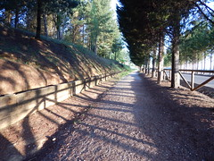 Rest area near Camponaraya (amgirl) Tags: sendero restarea trees arboles road caminodesantiago camponaraya elbierzo morning camponarayatocacabelos camponarayatopereje day22 april20 2017 shaded shadows