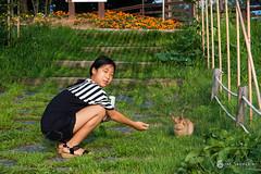Staring(응시) (golbenge (골뱅이)) Tags: joengok prehistoricsite rabbit seohee yeoncheon 서희 선사유적지 연천 전곡리 토끼 연천군 경기도 대한민국 kr