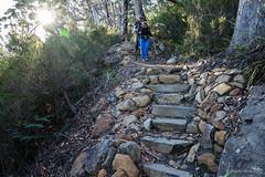 Stone steps (NettyA) Tags: 2017 3capestrack australia sonya7r tasmannationalpark tasmania tassie threecapestrack bushwalking hike bushwalkers steps stone track trail path