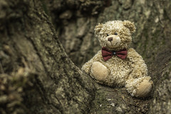 If you go down to the woods today... (judi may...mostly off for a while) Tags: happyteddybeartuesday teddy teddybear tree texture bowtie canon7d norfolk sheringham depthoffield dof bokeh textures