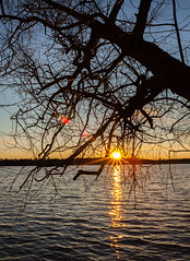 Evening star (Antti Tassberg) Tags: 28mm puu silhouette auringonlasku ilta laaksolahti sunstar lensflare texsture espoo kevät järvi aurinko evening lake spring sun sundown sunset tree twilight