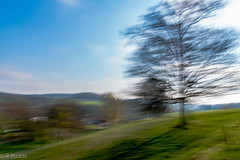 whats moving - ICM (no, I was not drunk) (Ralf_Budde) Tags: flickr icm landscape moving intentionalcamaramovement tree blue green nature art