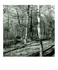 DIAP WOOD 002 (Dominiq db) Tags: diapo séries wood trees arbres forêt nature
