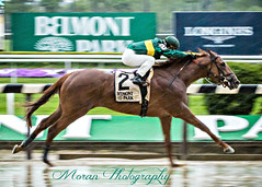 Timeline wins the Peter Pan (EASY GOER) Tags: horse racing sports equine thoroughbreds belmontpark races racetrack thoroughbred canon5dmarkiii newyorkhorseracing sportofkings canon 5d mark iii track horseracing horses ny athletes newyorkstate 5dmarkiii