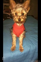 [See Comments Below] Tue, May 16th, 2017 Lost Male Dog - Rosslare Harbour, St Brendan's Estate, Wexford (Lost and Found Pets Ireland) Tags: lostdogrosslareharbourwexford lost dog rosslare harbour wexford may 2017