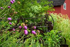Overgrown (johnmaiers) Tags: sunrise barn machinery farmmachinery