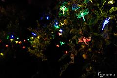 Licht Libellen