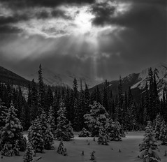 Enough light to find the way home by (Zeb Andrews) Tags: hasselblad canada canadianrockies film bw hasselblad500c alberta kootenaynationalpark filmisnotdead light landscape