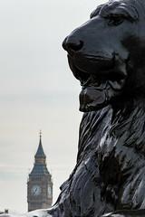 Guarding the Kingdom (Toni Camara) Tags: london lion statue bigben trafalgar square architecture art street urban travel