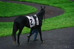 Keeneland 4/22/17 (Sagrasa) Tags: keeneland horseracing thoroughbred kentucky