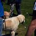 Dog show | Выставка собак