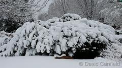 April 4, 2017 - Snowy scene in Broomfield. (David Canfield)