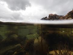 Half In Half Out (steve_whitmarsh) Tags: underwater water sea seaweed rocks coast reflection cullen moray scotland