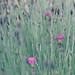 Three little flowers