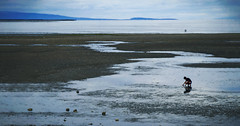 Looking for Treasures (charhedman - off and on) Tags: ontheeastcoastofvancouverisland idontrememberexactlywhereorwhichbeachthiswasbecausethereweresomany lowtide poolsofwater saltwater pacificocean boy seascape nobirdsintheskyforachange