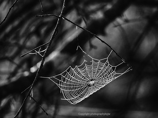 Web Revisited