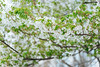 DSC09624 (維尼賈許) Tags: 2017tokyotrip day3 fujitv japan odaiba zeissbatis1885 台場 minatoku tōkyōto 日本 jp