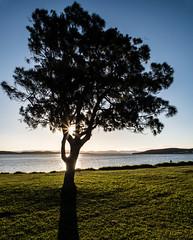 Angler's sunburst (OzzRod) Tags: pentax k1 smcpentaxa20mmf28 sunset sunburst shadows lake silhouette tree angler fisher park foreshore belmontsouth lakemacquarie