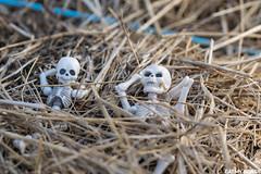 Mounette's garden (EatMyBones) Tags: fgurine garden hay miniature nature poseskeleton rement skeleton toy toyphotography