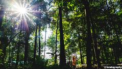sunburst-1 (LoretoGraphy) Tags: lady girl woman beautiful attractive pretty cute traditional native asian malay malaysian muslim hijab light naturallight sun sunlight eyes face smile day daylight loretography