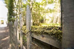 Mossy Fence (johnmbenson) Tags: versailles palaceduversailles paris france trees moss green sunny bright depthoffield