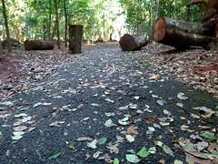 (IgorCamacho) Tags: outono autumn folhas leaves way caminho southern brasil paraná sul natureza nature fall