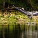 Heron Landing | May 2017
