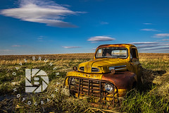"""Ford Tough"" 1948-1950 - #339 (DBruner240) Tags: ford truck pickup farmstead abandoned 1948 1949 1950 sunset nd north dakota country"