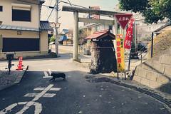 Crossing (eisei_toshi) Tags: g7x 埼玉 saitama 入間市 iruma 猫 cat 神社 shrine
