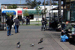 police haunt the poor like buzzards over a carcass (professional recreationalist) Tags: brucedean professionalrecreationalist victoriabc ourplace shelter poor poverty homeless homelessness housing crisis pigeon pigeons bird birds feed police cops pigs vicpd victoriapolice harass harassment