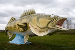 World's Largest Walleye (Spike's Shoes) Tags: scary stern invasive frightful angry fearful sculpture art artistic rendering jaws teeth mouth fish fishing large folk tale folktale portrait scenic horizontal outdoor outside destination getaway sightseeing tourism travel vacation visitor americana c5314132 mn american usa rushcityminnesota unitedstatesofamerica caughtbypaulbunyan worldslargestwalleye roadsideattraction