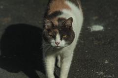 UNA. GATTINA     ----    A KITTEN (cune1) Tags: animali animals italia italy lazio canalemonterano strada street gattina kitten