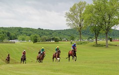 Cresting the hill (seventh_sense) Tags: virginia gold cup horse race racing equestrian great meadow track gallop galloping sprint racehorse racehorses jockey jockeys field goldcup virginiagoldcup greatmeadow spring 2017