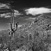 Blue Skies and Clouds to Complement a Desert Setting in Saguaro National Park (Black & White)