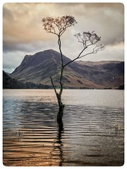 Lone Tree at Buttermere (bullboy1983) Tags: buttermere cumbria lake hills tree lonetree iphone7plus district sunset landscape