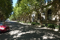 Verano - Summer (rrodriguez16) Tags: rarb1950 calle street city hall municipalidad árboles trees san pedro provincia de buenos aires province argentina sombras shadows
