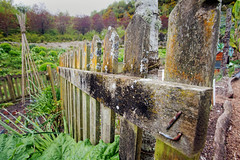 Eden Fence (jimj0will) Tags: ff fencedfriday fence wood timber eden garden horticulture mould fungus lichen nail